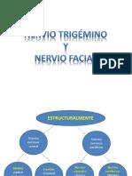 3.-Nervio Trigémino y Facial