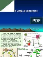 s 13 Ciclul de Viata Al Plantelor. Miscarea Si Sensibilitatea La Plante
