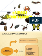 PowerPoint Invertebrados