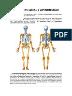 Esqueleto Axial y Apendicular 2.docx