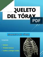 1 Anatomia- Esqueleto Del Tórax