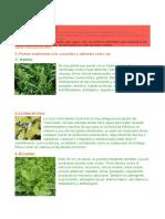 Definición de Plantas
