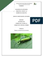316201278 Origen de Los Insectos Docx