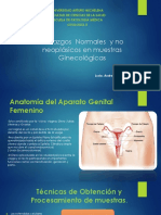 TEMA 1 Hallazgos Normales y No Neoplasicos en Muestras Ginecologicas