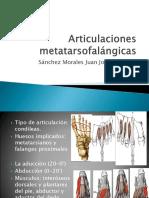 Articulaciones metatarsofalángicas