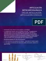 metacarpofalangica