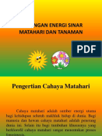 Hubungan Energi Sinar Matahari Dan Tanaman