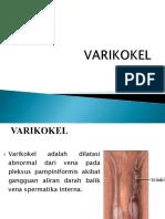 Definisi Dan Anatomi Varikokel
