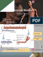 Estimulación Muscular Jr2