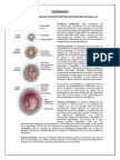 Embriologia usmp seminario