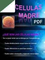 diapositivadecelulasmadre-121027003307-phpapp01.pdf