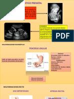 Expo Embrio
