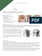 Examen Fisico Tórax, pulmón y Sindromes Respiratorios