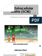 2016 10 18 The Extracellular Matrix (ECM).ppt