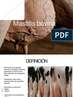 Mastitis Bovina