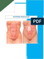 Psiprofilaxis Sistema Muscular