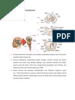 Formatio Reticularis Di Batang Otak