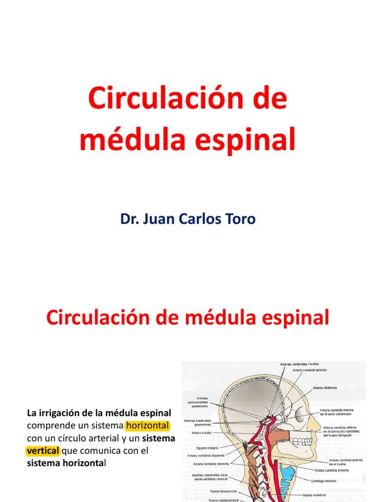 Circulacion de Medula Espinal