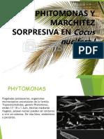 Marchitez-Sorpresiva