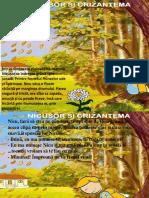 Nicusor Si Crizantema