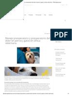 Manejo Preoperatorio y Posoperatorio Del Dolor en Perros y Gatos en Clínica Veterinaria – PiSA Agropecuaria