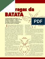 Batata-doce Hf15 Pragasbatata