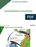 04 Iguana Galapagos
