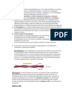 El citoplasma.docx