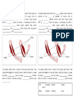 muscles worksheet