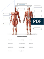 301474922-the-basic-muscles-worksheet