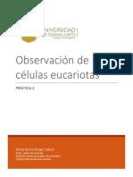 Observación de células eucariotas