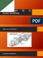 Fisiopatología de La Lesión Tendinea
