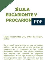 Eucarionte y Procarionte