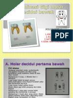 determinasigigimolardeciduibawahsyiiiik-130118110226-phpapp01