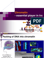 05 MBV4230 05 Chromatin