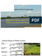 Dr. Steve Shirtliffe - Managing Weeds in Organic Pulse Crops