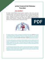 Sistema Vascular Vasos, Arterias y Venas