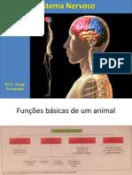 Sistema Nervoso 8 Ano