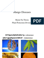 Mango Disease Myanmar