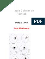 CelulavegetalII.pdf