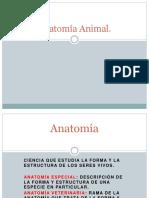 1.- Anatomía