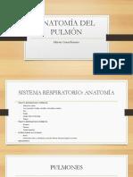Anatomía Del Pulmón