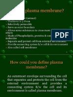 Plasma Membrane 1