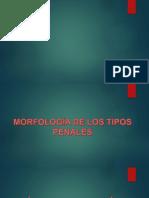 DIAPOSITIVA-DE-DERECHO-PENAL.pptx