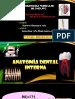 Anatomía-dental-interna.pptx