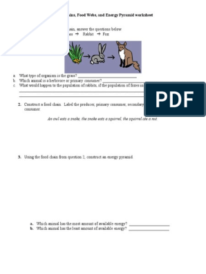 Food Chains Food Web and Energy Pyramid Worksheet