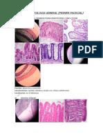 Repaso de Lab de Histologia General Del Organismo y Sistema Humano_ (Completo)