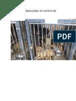 Municipios descuidan el control de mascotas.docx