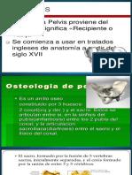 4°clase anatomia