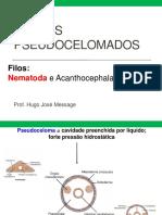 5_Pseudocelomados_Nematoda_e_Acantocephala_-_